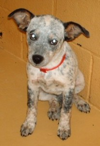 Puppy Kenna on death row in Georgia (before she was rescued), 2006