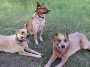 Cayenne, Chase, and Bandit
