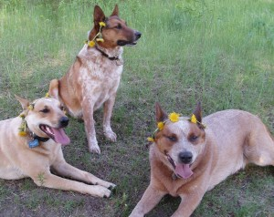Dogs in Spring-c