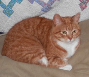 Gingersnap the Cat