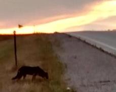 Dog on side of road