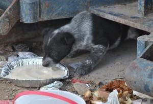 Puppy at Dump